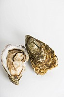 Fresh raw oysters (thumbnail)