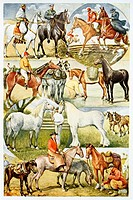 Horses  Antique illustration  1920