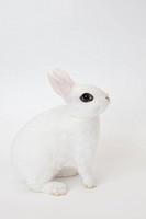 A rabbit.Blanc de Hotot.