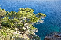Tree and cliffs on Mediterranean Coast