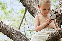 Little boy with a magnifying glass in a tree