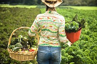 Woman harvesting fresh vegetables (thumbnail)