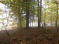foggy woods Piedmont, Italy