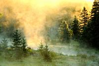 Morning mists on Junction Creek