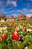 Spring tulips, Rotorua Museum, Government gardens, Rotorua.