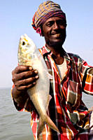 A fisherman shows a Hilsha fish caught in the Bay of Bengal Bhola, Bangladesh January 16, 2008
