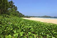 Fishing boats at Talalla beach, Talalla, Matara, South coast, Sri Lanka, Asia