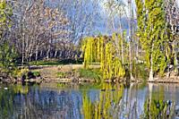 Small lake in Tierno Galván park San Martín de la Vega Madrid Spain