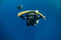 Diver with a recovered tusk Red Sea, Egypt RR