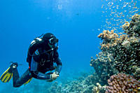 Diver in a relaxed mood as he watches the glassfish swarming around the corals Dahab Egypt