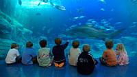 Children enjoy watching the sharks in aquarium Plymouth Devon UK