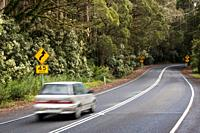 Australia, Victoria, Great Ocean Road, Otway Ranges, rainforest driving