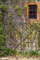 Australia, South Australia, Clare Valley, Clare, Window with creeper