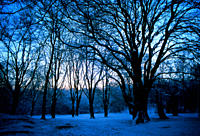 Early morning, blue colour cast in the snow sky Hampstead Heath, London, UK