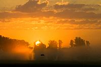 Sunrise over river valley, flying White Stork, poplars, Ebrach, Franconia, Bavaria, Germany