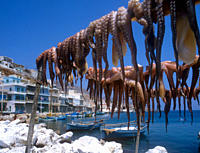 Octopus drying in the sun on the harbourside in Kalymnos Town