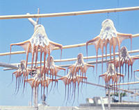Octopus drying on rack