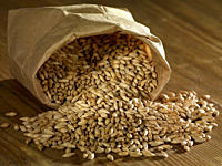 Malting barley spilling on wooden surface