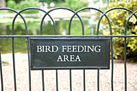 Bird feeding area, St James's Park, London