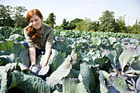 Woman picking cabbages in field