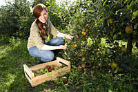 Young woman picking fresh apples (thumbnail)