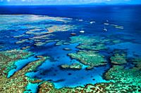 Bait Reef, Great Barrier Reef, Queensland, Australia (August, 2000)