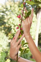 Close_up of woman's hands holding plant