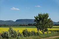 canola field with a blue sky, thunder bay, ontario, canada
