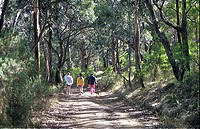 Bushwalkers wandering down the track