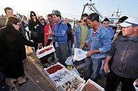 Gallipoli  Italy  Fresh fish landed &amp; sold directly from the quay