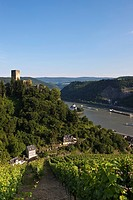 Burg Gutenfels Castle with vineyards above Burg Pfalzgrafenstein Castle in Kaub am Rhein, Rhineland_Palatinate, Germany, Europe