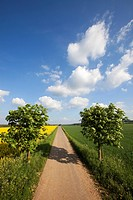 Landscape with road and cloud formations, Vulkan Eifel region, Rhineland_Palatinate, Germany, Europe