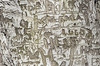 Words, letters carved into tree bark