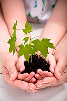 Two pairs of hands holding a seedling