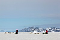 Two mushers running, driving dog sleds, teams of sled dogs, mountains behind, frozen Lake Laberge, Yukon Territory, Canada