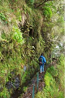 Walker hiking Levada do Caldeirao Verde - irrigation channel and footpath - Madeira