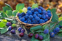 Damsons in a basket