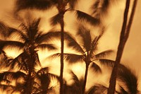 Hawaii, Oahu, Abstract motion blur of palm trees, Long exposure.