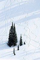 Washington, Mount Rainier National Park, Paradise Valley, Ski trails down snow_covered hill.