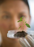 USA, New Jersey, Jersey City, Female scientist holding seedling in petri dish