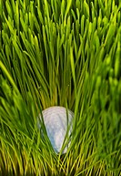 USA, New Jersey, Jersey City, Close_up view of golf ball in grass