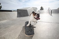 happy bull pushing skateboard