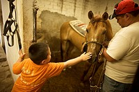 A boy strokes a horse as an equine therapist get ready the horse reins before a horse therapy session in Mexico City, August 14, 2010