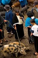 Ecuador, Otavalo, weekly animal market
