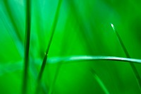 Grass with shallow depth of field