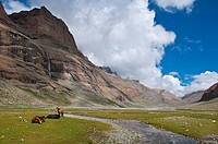 Horses grazing in the Lha Chu Valley, entrance to the Kailash Kora, the circumambulation around the sacred Mount Kailash, Western Tibet, Tibet, Centra...