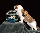 Cat looking into a fish tank