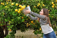 Girl pouring a bucket of lemons