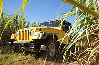 america, caribbean sea, hispaniola island, dominican republic, area of higuey, sugar cane plantation, off-road car
