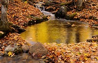 Golden reflections in a stream on the Blanchet Trail Gatineau Park in the Fall